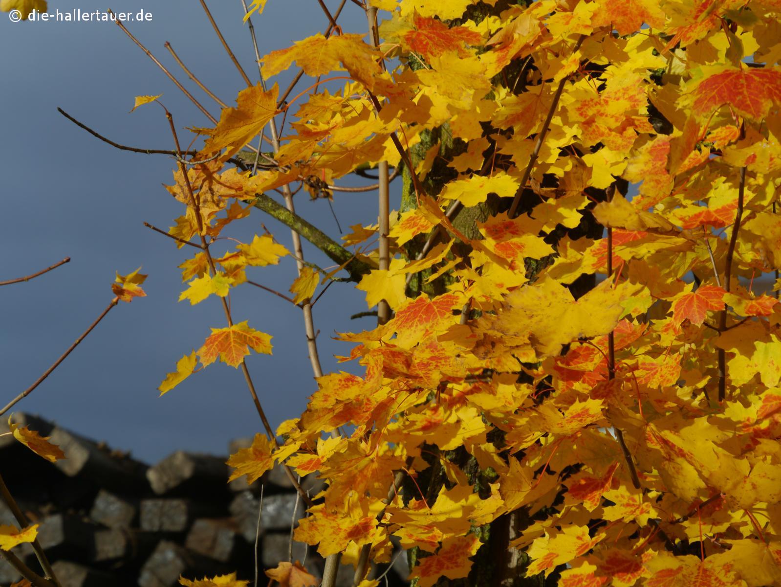 Hallertauer Herbstfarben