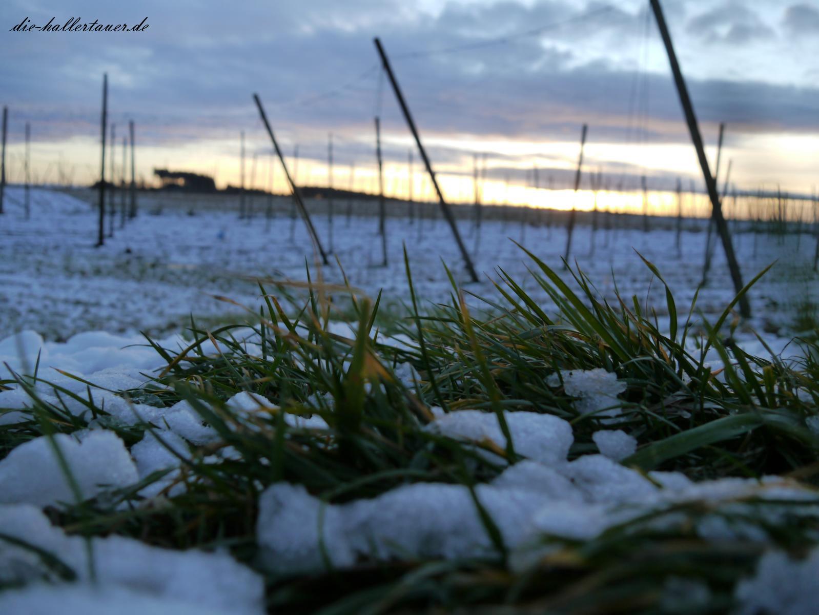 Schnee und Gras vorm Hopfengarten