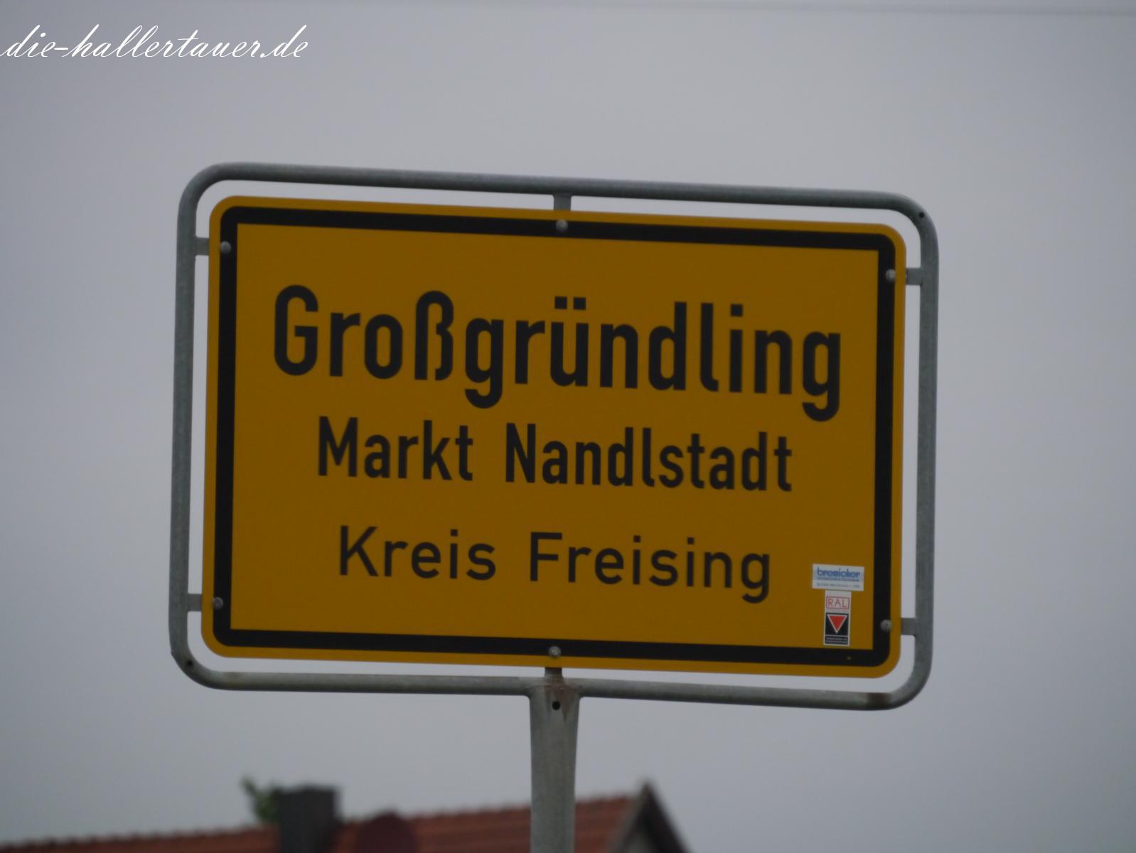 Hallertau Großgründling