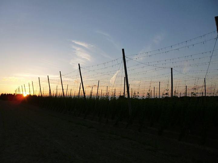 Sonnenuntergang Hallertau Tegernbach